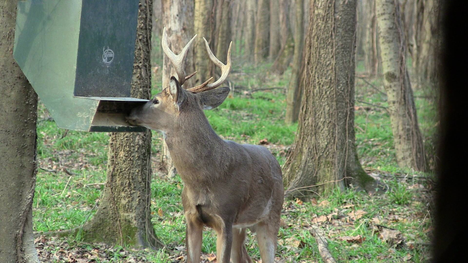 feeder tips and strategies concerns feeding deer feeders corn