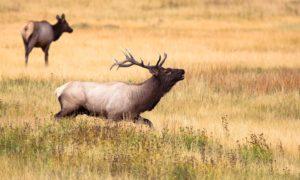 deer-918546