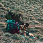 camping gear and german shepherd
