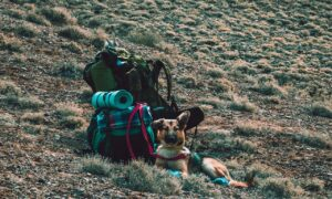 camping gear and german shepherd